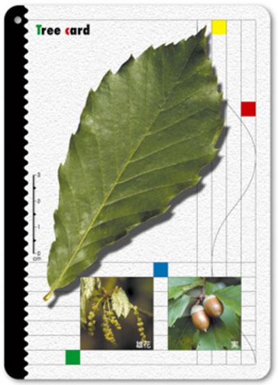 pf_jumoku_card.jpg